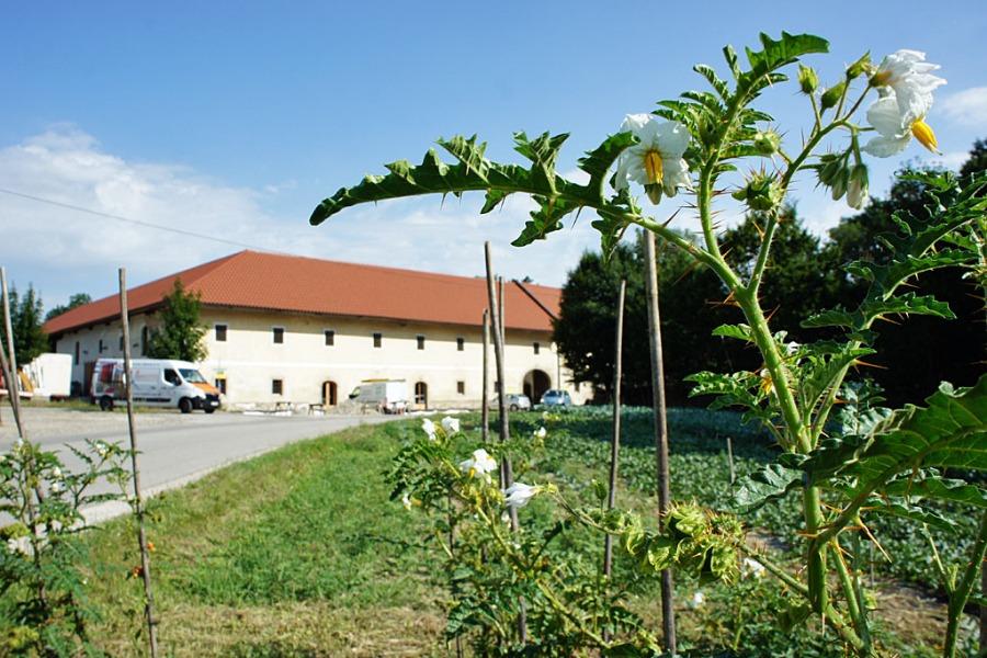 Nachbars Garten (c) Stern&Kringel